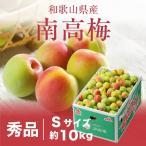 梅 紀州 南高梅 和歌山県産 秀品 Sサイズ 10kg 送料無料 うめ 青梅 生梅