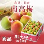 梅 紀州 南高梅 和歌山県産 秀品 3Lサイズ 1kg 送料無料 うめ 青梅 生梅