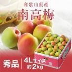 梅 紀州 南高梅 和歌山県産 秀品 4Lサイズ 2kg 送料無料 うめ 青梅 生梅