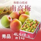梅 紀州 南高梅 和歌山県産 秀品 4Lサイズ 1kg 送料無料 うめ 青梅 生梅