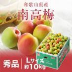 梅 紀州 南高梅 和歌山県産 秀品 Lサイズ 約10kg 送料無料 うめ 青梅 生梅