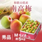 梅 紀州 南高梅 和歌山県産 秀品 Mサイズ 5kg 送料無料 うめ 青梅 生梅