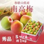 梅 紀州 南高梅 和歌山県産 秀品 Sサイズ 約1kg 送料無料 うめ 青梅 生梅