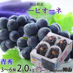 (送料無料)  JA岡山  『ニューピオーネ』 (青秀)  3〜5房 (約2.0kg) 化粧箱入り