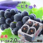 ぶどう ニューピオーネ 赤秀 3〜5房 2kg 岡山県産 JAおかやま 葡萄 ブドウ