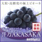 ぶどう プレミアムニューピオーネ  誉乃AKASAKA ほまれのあかさか  JA岡山東 赤坂産 約650g 1房 父の日 お中元 ギフト 送料無料 葡萄 ぶどう ブドウ