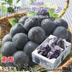 ぶどう オーロラブラック 赤秀 大粒 3〜5房 約1.5kg 岡山県産 JAおかやま 葡萄 ブドウ