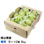 シャインマスカット 晴王 岡山県産 JAおかやま 青秀 5〜10房 約5kg ギフト 送料無料 ぶどう 葡萄 ブドウ