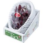 紫苑 しえん 岡山県産 JAおかやま 赤秀  1房 約600g  送料無料 贈り物 ギフト 葡萄 ぶどう ブドウ