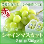 シャインマスカット 岡山県産  赤秀 約500g×2房  ギフト 送料無料 葡萄 ぶどう ブドウ