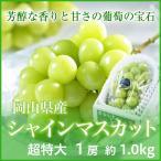 シャインマスカット  岡山県産   超特大 1房 約1kg以上 化粧箱入り 送料無料 葡萄 ぶどう ブドウ
