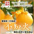 (送料無料) 愛媛県(中島産)『不知火』しらぬひ(デコポンの品種名)  風のいたずら(ちょっと訳あり)大きさおまかせ(約5.0kg)