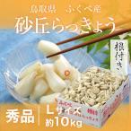 根付き 砂丘らっきょう 秀品 Lサイズ 約10kg  鳥取県産 JA鳥取いなば 福部産 送料無料 らっきょ 贈り物 ギフト お中元