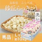 洗い 砂丘らっきょう 秀品 Lサイズ 約10kg  鳥取県産 JA鳥取いなば 福部産 送料無料 らっきょ 贈り物 ギフト お中元