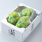 ぶどう 瀬戸ジャイアンツ 青秀 2〜5房 約1.5kg 岡山県産 JAおかやま 葡萄 ブドウ