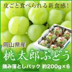 ぶどう 桃太郎ぶどう 詰み落とし 約200g×6パック 送料無料 岡山県産 香川県産  葡萄 ブドウ