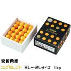 きんかん たまたま エクセレント 完熟きんかん 2L〜3Lサイズ  1kg 宮崎県産 送料無料 キンカン 金柑