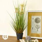 置くだけでお部屋がきれいに!光触媒観葉植物