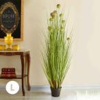 置くだけでお部屋がきれいに!珍しいデザインの光触媒観葉植物