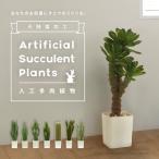 光触媒加工 観葉植物 多肉植物 サボテン 全8種 造花 人工