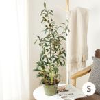 観葉植物 光触媒 オリーブツリーグラスバケット Sサイズ 約68cm #2425 フェイクグリーン 人工 造花 室内