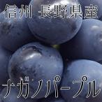 信州 長野県産  【ナガノパープル】約1.5kg〜(3房) 種なし 送料無料