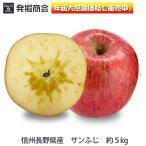2016年度 期間限定 りんご【信州 長野県産 サンふじ】家庭用 約5kg
