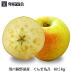 2016年 期間限定 りんご 【信州 長野県産 ぐんま名月】約5kg(ご家庭用)