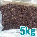 業務用 ふのり 【送料無料】 北海道函館産 ふのり 業務用 5kg箱