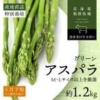 蘆筍 - アスパラ 北海道産 ギフト お取り寄せ グリーン アスパラガス 早期予約 M-L 1.2キロ バーベキュー 食材 BBQ