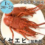 千葉県 房州産 イセエビ 1尾(200〜250g)加熱用 冷凍 訳あり 在庫限り  いせえび 伊勢海老