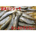 【訳あり子持ちシシャモ500g】 カラフトししゃも500g!