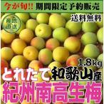 生梅 紀州南高完熟梅 1.8kg 「完熟梅」 和歌山県産 う