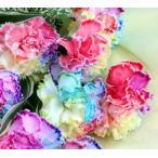 レインボーカーネーション (10本) の花束【20021】