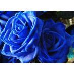 青いバラ 「ブルーローズ」(7本)の花束(かすみ草入り) 【20042】