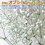 【 カスミソウ 】送料無料の花束のオプション用のカスミソウです
