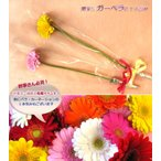 贈呈花ガーベラ 1輪 1本220円※10本以上でご注文下さい 1本ブーケ ガーベラ(※5/6〜5/9はお届け出来ません)