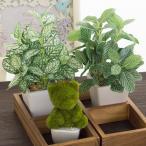 Yahoo!花と緑のはなここ送料無料 お中元・サマーギフト アニマルモス(9種類から選べます)+ミニ観葉お買い得3点セット アートグリーン