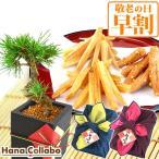 敬老の日 ギフト 松 盆栽 セット 和菓子 観葉植物 花 お菓子 プレゼント