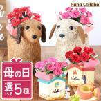 母の日プレゼント ギフト 鉢植 Flower gift sweets