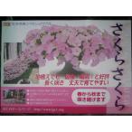 園芸研究家杉井明美さん育種。病気天候に強い最強ペチュニア