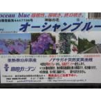 宿根朝顔オーシャンブルー 3.5号(10.5cm)ポット苗 「緑のカーテンにも使えるつる性植物」