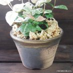 プランター おしゃれ 植木鉢 陶器 萬古焼の陶器の小さな植木鉢 ブラウン 3.5号