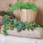 プランター おしゃれ 植木鉢 木製 流木フラワーポット 横長