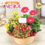 敬老の日 ギフト 花 3種でつくるおまかせ 花かご