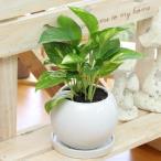 ポトス 陶器鉢(鉢皿付) 高さ40cm〜50cm 観葉植物(生花)
