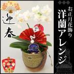 お正月飾り(生花) お正月 ミニミニ胡蝶蘭 信楽焼 高さ16cm×幅12cm×奥行10cm