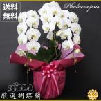 お正月飾り(生花) お正月 ミニミニ胡蝶蘭 陶器鉢 高さ23cm×幅12cm×奥行9cm