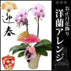 お正月飾り(生花) お正月 ミディ胡蝶蘭 陶器鉢 高さ53cm×幅32cm×奥行14cm