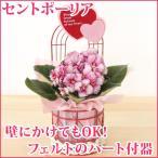 送料無料 生花 セントポーリア かわいいハートの器 壁にも掛けれるワイヤー器フェルトのハート付 高さ26.5cm 花鉢